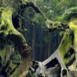 Hoia-Baciu-Forest