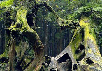 ประวัติป่า Hoia-Baciu Forest